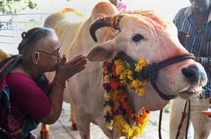"""الهند تحظر ذبح الأبقار والجمال في """"كشمير"""" خلال عيد الأضحى"""
