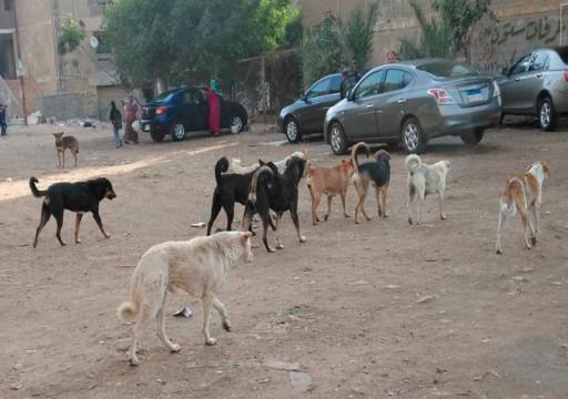 تنديد حقوقي وبرلماني حول تصدير القطــط والكلاب في مصر