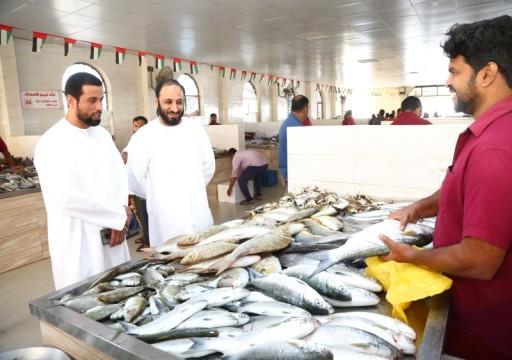 انخفاض أسعار الأسماك في أم القيوين بنسبة 50%