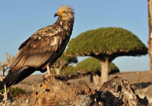ما سر رغبة أبوظبي في الاستيلاء على جزيرة سقطرى اليمنية؟