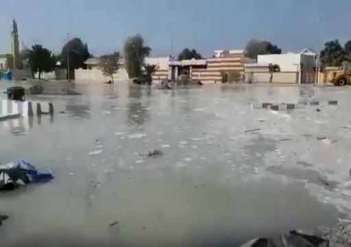 فيديو كلباء تغرق بمياه البحر يكشف عورة البنية التحتية في الدولة