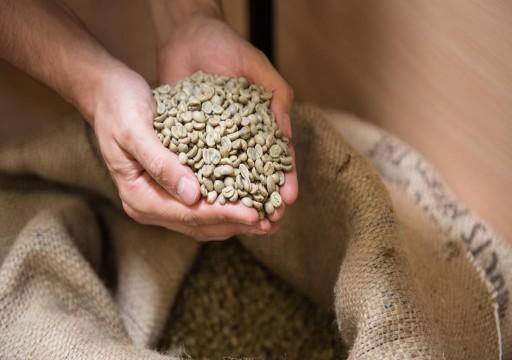 خبيرة تغذية: القهوة الخضراء سلاح فعال لإنقاص الوزن