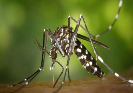 مع ارتفاع درجة حرارة الصيف... هل يمكن للفيروس أن ينتقل عبر البعوض؟