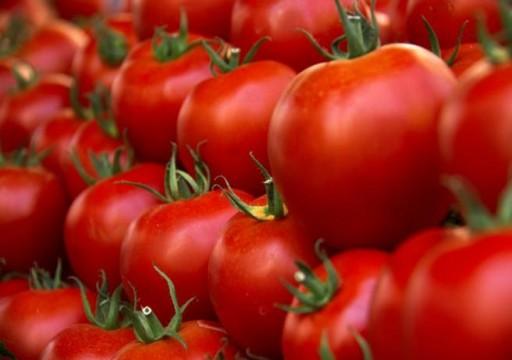 دراسة: الطماطم تحسن جودة الحيوانات المنوية ونوعيتها