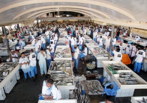 استقرار أسعار الأسماك مع تطبيق قرار حظر صيد الصافي والشعري