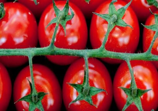 دراسة جديدة: الطماطم تعزز جودة الحيوانات المنوية