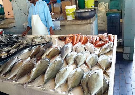 انتعاش أسواق السمك في الشرقية بعد استقرار الطقس