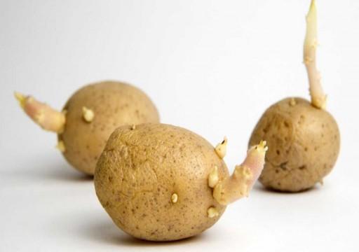 مجلة ألمانية تحذر من تنازل البطاطس في هذه الحالة