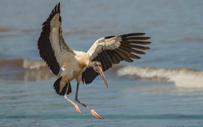 بولونيا تطالب لبنان بعبور آمن لطيور اللقلق المهاجرة
