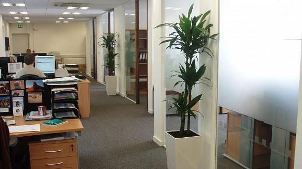 تزيين مكان العمل بالنباتات يزيد من تركيز الموظفين