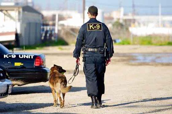 الحكم بالسجن المؤبد لكلب عض طفل
