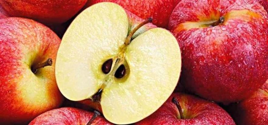 بلدية دبي: بذور التفاح ضارة حال تناول كميات كبيرة منها
